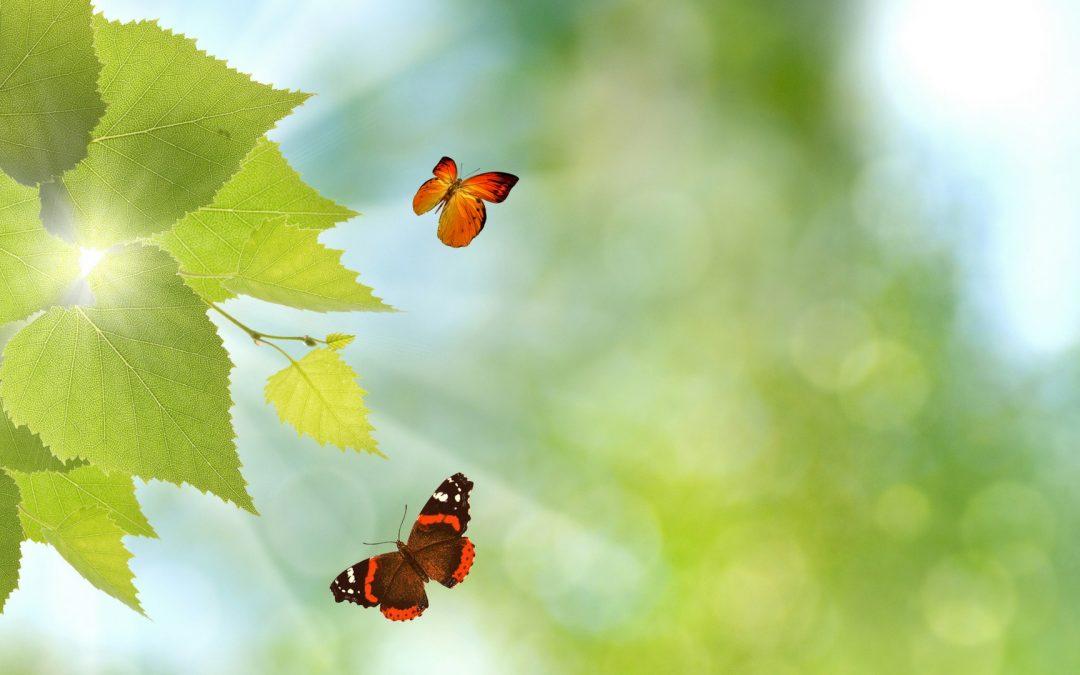 Ga vliegen als een vlinder door de disfunctionele programmering, die voortkwam uit jouw opvoeding, te doorbreken!